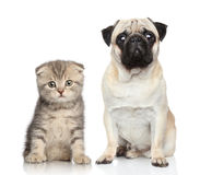 Dog and kitten. Potrait on white background stock images