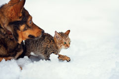 Dog and kitten in the snow. Dog and little kitten walking in the snow stock photo