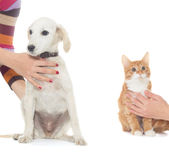 Dog and kitten Royalty Free Stock Images