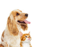 Dog and kitten Royalty Free Stock Photo