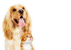 Dog and kitten Royalty Free Stock Photos