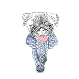 Dog with knitted scarf. Cute pug portrait. Vector illustration. Dog with knitted scarf. Cute pug portrait. Vector illustration Royalty Free Stock Images