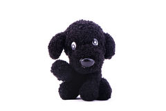 Dog knitting doll Stock Photos