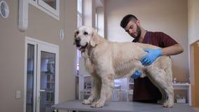 Dog kontrollen för inre organ för ` s den vård- av veterinären lager videofilmer