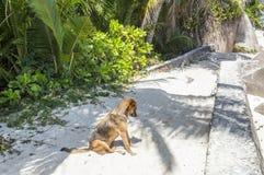 Dog in La Digue Island. Stock Photos