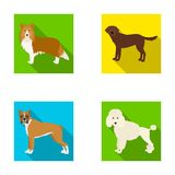 Dog, laika, beagle and other web icon in flat style.Poodle, animal, ears icons in set collection. Royalty Free Stock Photography