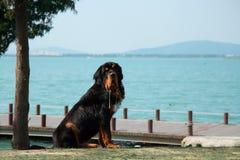 Dog beside the lake. Royalty Free Stock Image