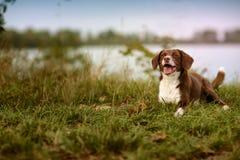 Dog at the Lake Royalty Free Stock Images