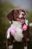 Dog at the Lake Stock Photography