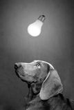 Dog and lamp Stock Image