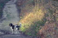 dog in lane royalty free stock photo