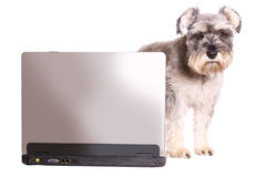 Dog with laptop Stock Images