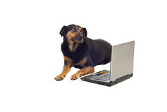 Dog with laptop Stock Photography