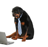 Dog with laptop Stock Image