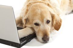 Dog with a laptop Royalty Free Stock Photos