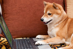 Dog with laptop Royalty Free Stock Image