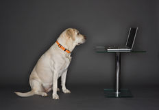 Dog With a Laptop Royalty Free Stock Photography