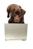 Dog and laptop Royalty Free Stock Photos