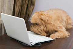 Dog and a laptop Stock Images