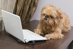 Dog and a laptop Royalty Free Stock Image