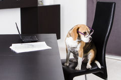 Dog and laptop Royalty Free Stock Images