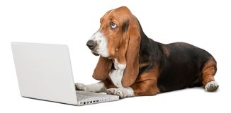 Basset Hound dog with laptop on background royalty free stock images