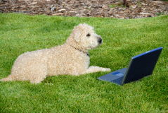 Dog with laptop in meadow Royalty Free Stock Photos