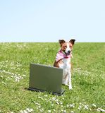 Dog with laptop outdoor. A young beautiful dog is sitting on a meadow with a notebook Stock Photos
