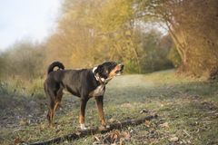 Dog in the late frosty autumn royalty free stock photo