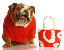 Dog laughing with purse