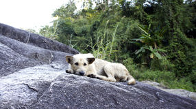 Dog lay on the rock hill Stock Image