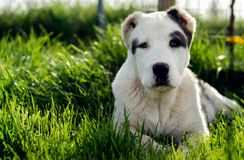 Dog laying down in grass Stock Photos