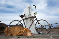 Dog laying at a ghost statue Royalty Free Stock Photos