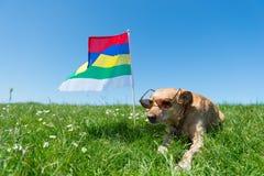 Dog laying in grass on Dutch island Stock Photo