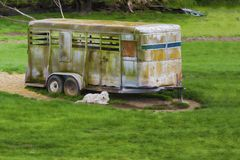 Dog laying next to a rusting horse trailer. A white dog lays next to a abandoned rusting horse trailer in a pasture Royalty Free Stock Image