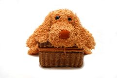Dog Laying On A Wattled Box Royalty Free Stock Photos