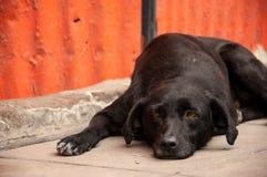 Dog Laying on Sidewalk Thinking. Lazy black dog laying on sidewalk and thinking Stock Photos