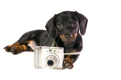 Dog Lays with a camera. Black dog Lays with a camera on white background isolated close up royalty free stock images