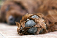 Dog laziness Stock Photo