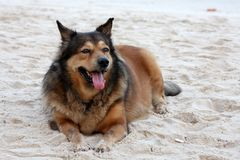 Dog lazing on beach Royalty Free Stock Image