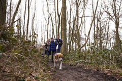 Dog leading family walking in a wood, low angle view Royalty Free Stock Image