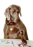 Dog learns to paint Royalty Free Stock Photography