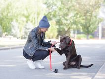 A dog on a leash gives a paw to his mistress stock images