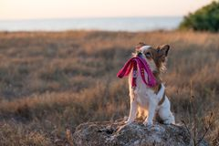 Dog leash Royalty Free Stock Images
