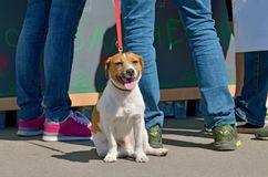 Dog on a leash from the owner. She obediently sits next to him royalty free stock image