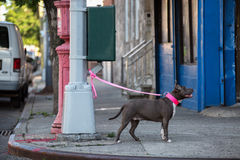 Dog on a leash tied to a street lamp. Stock Image