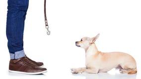 Dog leash walk Royalty Free Stock Image