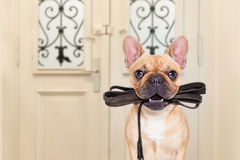 Dog leash walk Royalty Free Stock Image