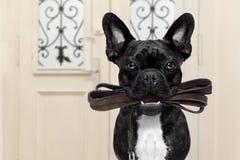 Dog leash walk Stock Photo