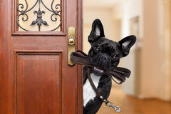 Dog leash walk Stock Photography